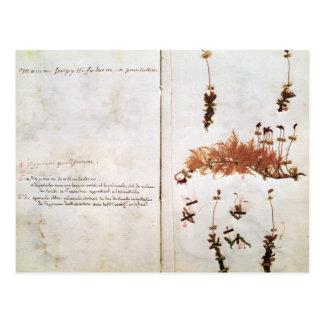Página 15 de un herbario postal