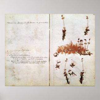 Página 15 de un herbario póster
