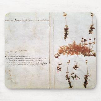 Página 15 de un herbario tapetes de raton