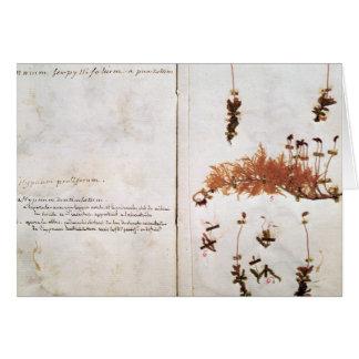 Página 15 de un herbario tarjeta de felicitación