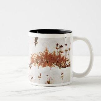 Página 15 de un herbario taza de café de dos colores