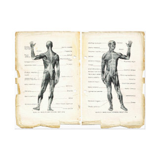 Páginas del libro de la anatomía del vintage impresión en lienzo