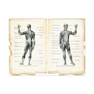 Páginas del libro de la anatomía del vintage impresión en lona