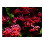 Pagoda Flowers Colorful Red and Pink Floral Postcard
