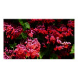Pagoda Flowers Colorful Red and Pink Floral Poster