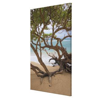 Paia Bay Beach, Maui, Hawaii, USA Canvas Prints