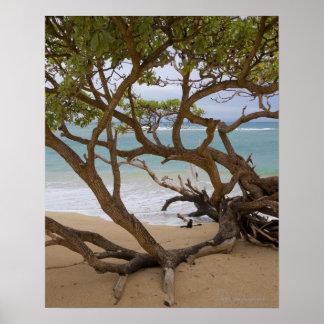 Paia Bay Beach, Maui, Hawaii, USA Poster