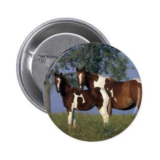 Paint HMare & Foal Pinback Button