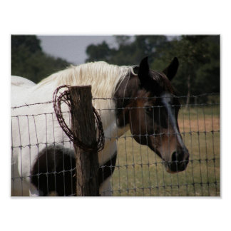 Paint Horse and Fence Poster