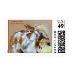 Paint Horse boy child art animal wild domestic Postage Stamps