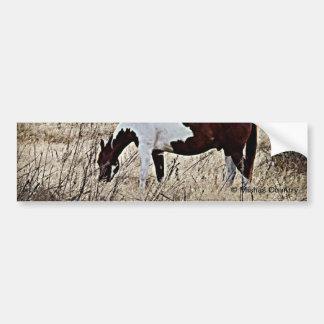 Paint Horse Car Bumper Sticker