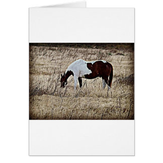 Paint Horse Card