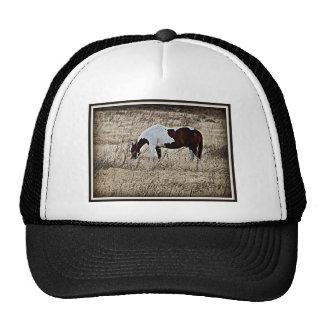 Paint Horse Hat