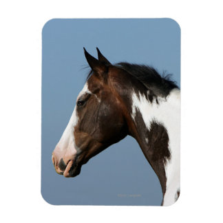 Paint Horse Headshot 1 Magnet