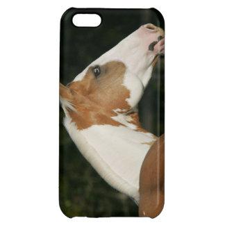 Paint Horse Headshot 2 iPhone 5C Cover
