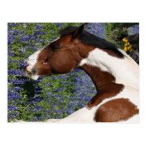 Paint Horse in Field of Wildflowers Postcard