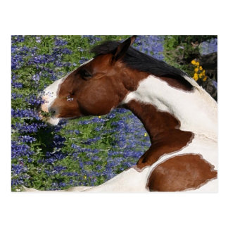 Paint Horse in Field of Wildflowers Postcard