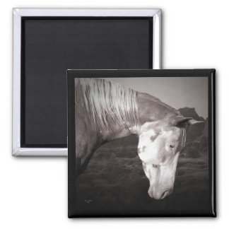Paint Horse in the Badlands 2 Inch Square Magnet