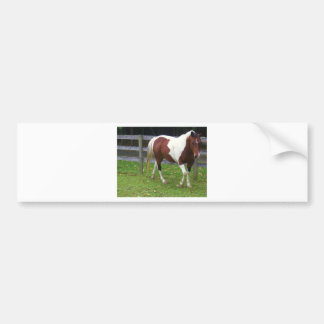Paint Horse in the Pasture Bumper Sticker