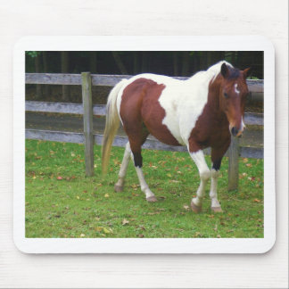 Paint Horse in the Pasture Mouse Pad