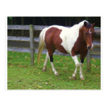 Paint Horse in the Pasture Post Card