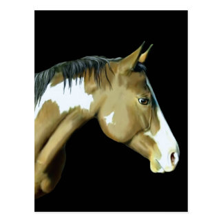 Paint Horse, Lady Post Card