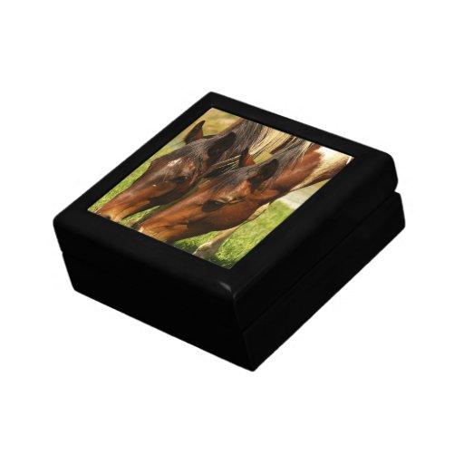 Paint Horse Love Gift Box
