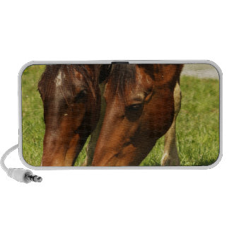 Paint Horse Love Speakers