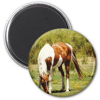 Paint Horse 2 Inch Round Magnet