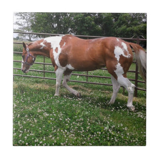 Paint Horse Mare Named Flashy Tile