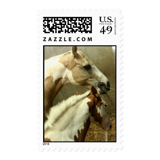 Paint Horse Pair  Postage Stamp