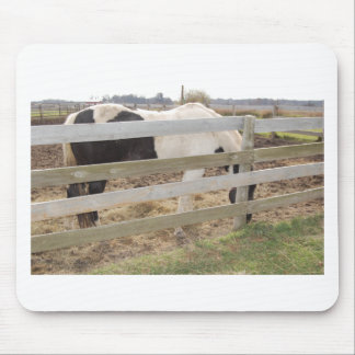 Paint Horse/Pinto Mouse Pad