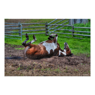 Paint Horse Rolling in Mud Funny Equine Photo Poster