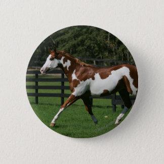 Paint Horse Running 1 Button