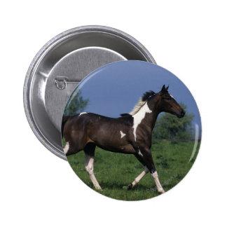 Paint Horse Running 2 Button