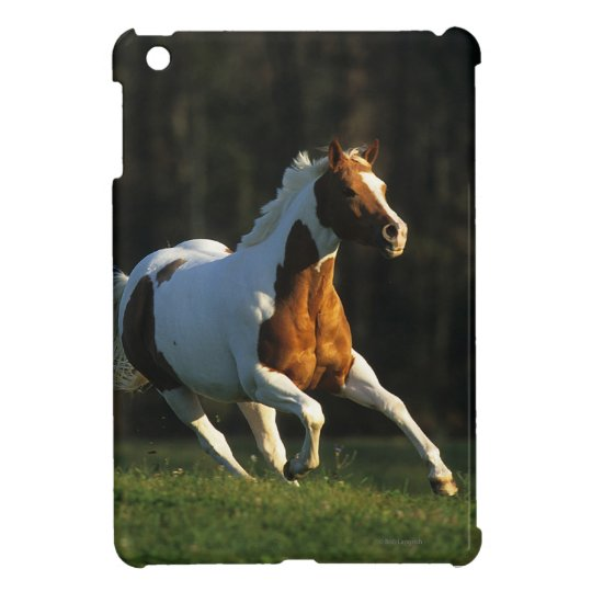 Paint Horse Running Fast iPad Mini Covers