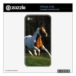 Paint Horse Running Fast iPhone 4 Skins
