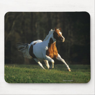 Paint Horse Running Fast Mouse Pad