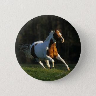 Paint Horse Running Fast Pinback Button