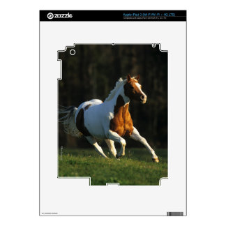 Paint Horse Running Fast Skin For iPad 3