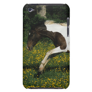 Paint Horse Running in Field of Flowers iPod Touch Case