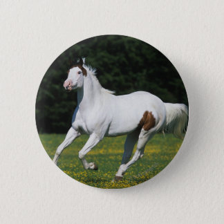Paint Horse Running in Grassy Field Pinback Button