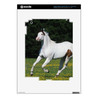Paint Horse Running in Grassy Field Skins For iPad 3