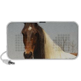 Paint Horse Speakers