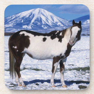 Paint Horse Standing in the Snow Beverage Coaster