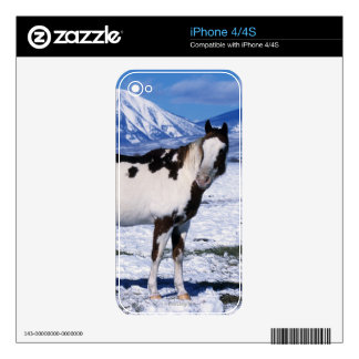 Paint Horse Standing in the Snow iPhone 4 Skins