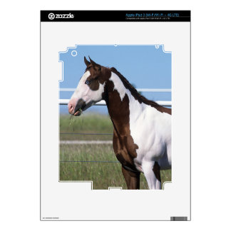 Paint Horse Standing iPad 3 Decals