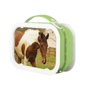 Paint Horse Yubo Lunch Box