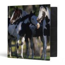 Paint Horses Binder