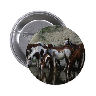 Paint Horses Drinking Button